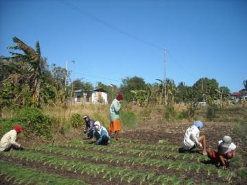 Philippine Agribusiness