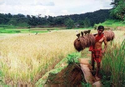 rice worker